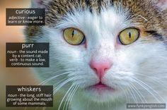 Cat - phocab.net