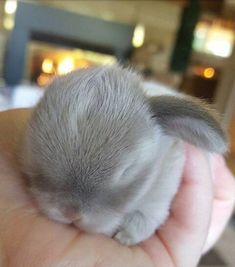 These little bunnies are guaranteed to make you squeal! So precious and delicate! @ cute animals # bunnies # cute bunnies photos # cute animal photos cutest baby animals 19 Super Tiny Bunnies That Will Melt The Frost Off Your Heart Baby Animals Super Cute, Cute Baby Bunnies, Cute Little Animals, Cute Funny Animals, Cutest Bunnies, Tiny Baby Animals, So Cute Baby, Little Pets, Baby Animals Pictures