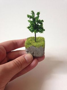 Tiny tree on concrete with grass slice of earth miniature