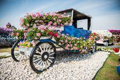 Волшебный парк цветов Dubai Miracle Garden - ПоЗиТиФфЧиК - сайт позитивного настроения!