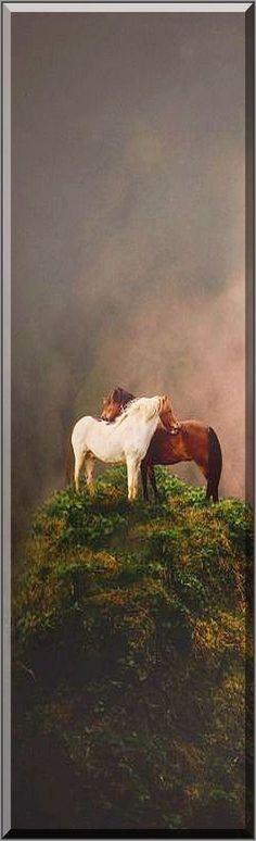 AMAZING HORSE SHOT #Fotograf: corinna-kr #horses love mountain