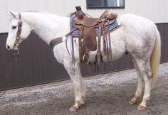 Horses for Sale American Quarter Horse, Quarter Horses, Cattle For Sale, Ranches For Sale, John Gray, Blue Roan, Horse Ranch, Ranch Life, Horses For Sale