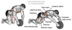 Wheel rollout. A highly recommended core exercise! Main muscles worked: Iliopsoas, Tensor Fasciae Latae, Sartorius, Pectineus, Adductor Longus, Adductor Brevis, Latissimus Dorsi, Teres Major, Pectoralis Major, Pectoralis Minor, Posterior Deltoid, and Rhomboids.