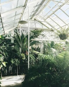 i could honestly live in this greenhouse  just made a 500px account, follow me on there if u have one!