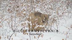 Erdei álom ,első rész- Wild Transylvania film