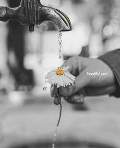 Splash Photography, Photo B, Color Splash, Kiss, Hands, Black And White, Orange, Gray, Desert Flowers