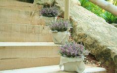 flores boda cayuna vulgaris