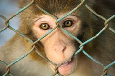5 Super Easy Ways to Help Animals in Laboratories...please help these poor animals who deserve a better life!