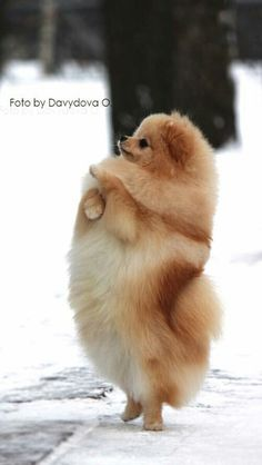 Look! I can stand on my tippy toes!
