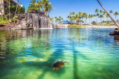 hawaii lagoon - Google Search