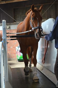 Queenie goning for a walk :) Horse Training, Equestrian, Therapy, Horses, Animals, Treadmill, Horseback Riding, Animales, Animaux