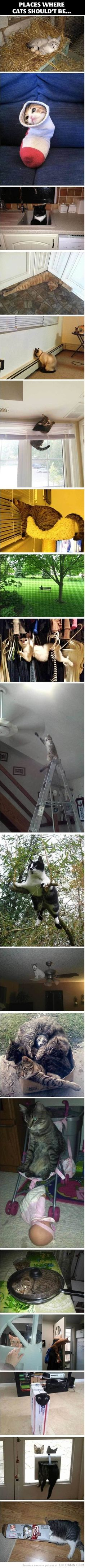 Funny cats: Places where cats shouldn't be LOL, DAMN!