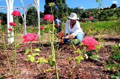 Curso de cultivo de rosas - Sempre Mais