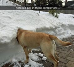 Funny Animal Pictures Of The Day 23 Pics - Funny Dog Quotes - Funny Animal Pictures Of The Day 23 Pics The post Funny Animal Pictures Of The Day 23 Pics appeared first on Gag Dad. Dog Quotes Funny, Funny Animal Memes, Dog Memes, Cute Funny Animals, Funny Animal Pictures, Funny Cute, Dog Pictures, Funny Dogs, Animal Quotes