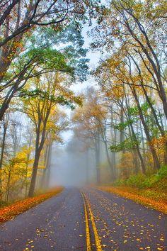 ~~A Foggy Drive Into Autumn - Blue Ridge Parkway ~ North Carolina by Dan Carmichael~~