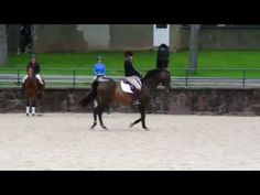 George H. Morris Gladstone Program Day 5: Reviewing to Prep for the Final Test – Horse Junkies United