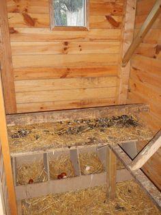 Interieur poulailler bois google search chickens for Amenagement interieur poulailler bois