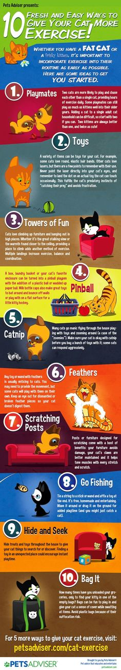 10 Fresh and easy ways to give your cat more exercise! My cats have all of this and more - no fat cats in my house (well except for the year my one cat kept sleeping with her face in the food bowl - sigh). Don't forget to check out more ideas at website posted at the bottom of the Infographic from Pets Adviser Read more: http://mehimandthecats.com/category/infographic/#ixzz2GbQQnYGD - See more at: http://mehimandthecats.com/category/infographic/#sthash.jPE6JzJe.dpufcat exercise Infographic