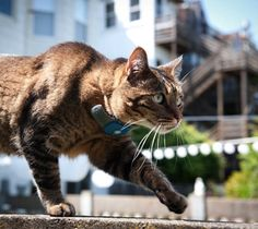 GPS Based Wildlife Animal Tracking System Httpwww - Gps trackers reveal the crazy distance our cats walk when they go out at night