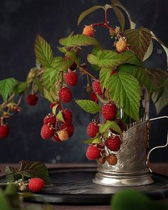This Ivy House - butteryplanet: cinemagraph artist: kitchenghosts Fruit Photography, Still Life Photography, Raspberry, Strawberry, Still Life Photos, Cinemagraph, Foto Art, Delicious Fruit, Fruit Art