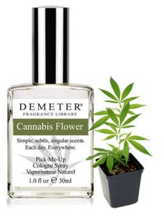 I love the reviews for this scent, lol | At Demeter, we do not involve ourselves with the politics, but with the beautiful scent of the Cannabis Flower. Slightly floral, slightly spicy, but unmistakably Cannabis, this fragrance has a deep and penetrating beauty. The Cannabis Flower, however, which is at the heart of this fragrance, is used to make Marijuana, and is illegal to possess.