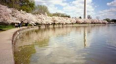 """Spring is a great time to visit DC's National Mall. Enjoy a relaxing stroll along the Tidal Basin, the reservoir bordered by thousands of cherry blossoms in full bloom this time of year. Also, be sure not to miss the Tulip Library on the north side of the basin, where you'll find nearly 100 varieties of tulips. And come nighttime, stop by the World War II Memorial, where you can sit by the edge of the cascading fountain at its center, resting your head on the shoulder of your evening date … ..."