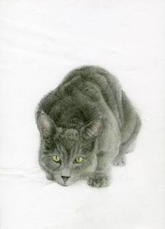 Oliver the Cat pencil drawing by Allen D. Aramide