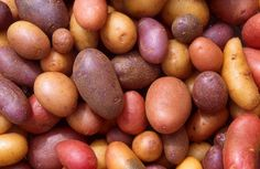 Growing potatoes in a garbage can?: Gardening Tips For Growing Vegetables In Small Spaces: How To Grow Potatoes In A Garbage Can Curly Endive, Potato Varieties, Benefits Of Potatoes, Guisado, Planting Potatoes, Weight Gain Meals, Weight Loss, Valeur Nutritive, Peeling