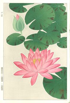Artist Kawarazaki Shodo Japanese Woodblock Print Name Suiren (Water Lily) Approx Image Size Height cm x Width cm (H x W Date Originally published in Showa mid-term era by Unsodo. This is a later edition from the original blocks. Asian Flowers, Japanese Flowers, Japanese Drawings, Japanese Art, Water Lily Tattoos, Lilies Drawing, Watercolor Projects, Japanese Embroidery, Japanese Painting