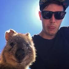 """tastefullyoffensive: """"Quokka Selfies """" If anyone who loves me ever wins the lottery. I don't want my own quokka,I just want to meet a few. Smiling Animals, Cute Animals, Meanwhile In Australia, Quokka, Perfect Selfie, Taking Selfies, Cute Stories, Funny Video Memes, Domestic Cat"""