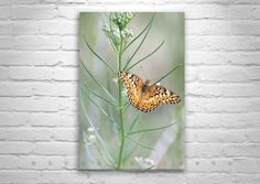 Butterfly Photograph on etsy