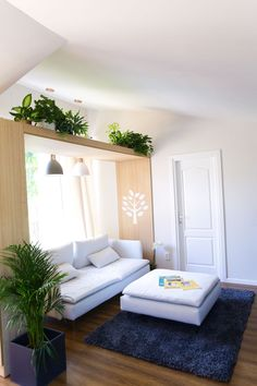 living room ideas, interior plants in living room