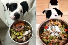 Alimentação natural para cães é melhor que ração?                                                                                                                                                                                 Mais