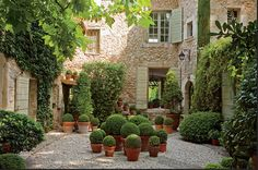 Potted Boxwood ~ Maison de Betty et François Catroux en Provence