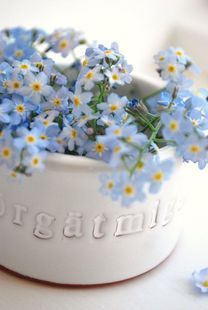 blue flowers in white crock