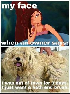 -Repinned- More groomer humor My favorite was what do you mean you can't brush him out it's just a few tangles..