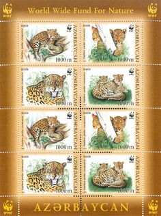 Mini Sheet with Caucasian Leopard Love Mail, First Day Covers, My Themes, Stamp Collecting, Mail Art, Postage Stamps, Mammals, Countries, Sign