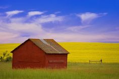 Designpics A Red Farm Building Against A Canola Field Photographic Print on Canvas