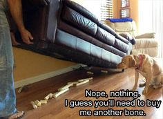 Dogs are just awesome. They are so cute and funny at the same time. Here are some hilarious Dog Memes. Funny Animal Memes, Dog Memes, Cute Funny Animals, Funny Cute, Funny Dogs, Funny Memes, Funniest Memes, Funny Animal Pictures, Best Funny Pictures