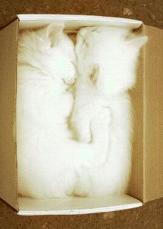 Of course, white cats in a white box!