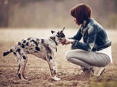 Comment apprendre des ordres à votre chien http://www.animalcompagnie.com/comment-apprendre-des-ordres-a-votre-chien.html