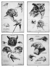 DoverPictura - Design in Nature: Birds