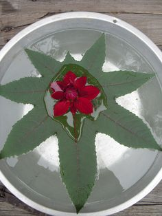 poke a hole in a large leaf,slip a flower into it,and float!