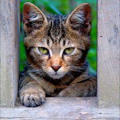 いらっしゃいませ。   May i help you?