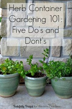 Herbs Gardening Want to start an herb garden? Here are 5 Dos and Don'ts to help get you started! - 5 Dos and Don't for Planting Herbs. Simple advice to help your container herb garden thrive so you can have fresh herbs any time for any recipe or dish! Growing Vegetables, Growing Plants, Growing Herbs In Pots, Growing Mint, Gardening For Beginners, Gardening Tips, Gardening Quotes, Gardening Supplies, Gardening Services