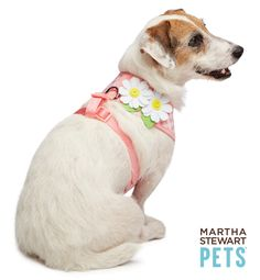 Dreaming of Spring? We've got styles to chase away that SAD and to keep your pup looking fresh as a daisy. #MarthaStewartPets, only @PetSmart.