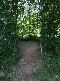 Secret Birch tree enclosure