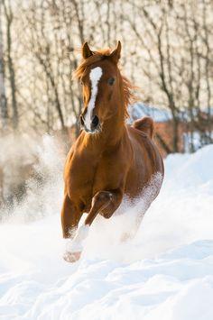 Voyages à dos de cheval