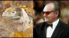 Jack Nicholson, die coole Echse!