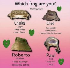 Frog Pictures, Funny Pictures, Fb Memes, Funny Memes, Jokes, Cute Frogs, Frog And Toad, Clueless, Mood Pics